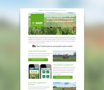 BASF Email Newsletter Design